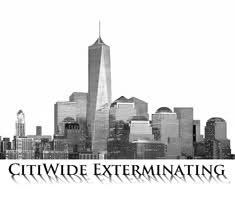 CITIWIDE EXTERMINATING - We get rid of what bugs you.